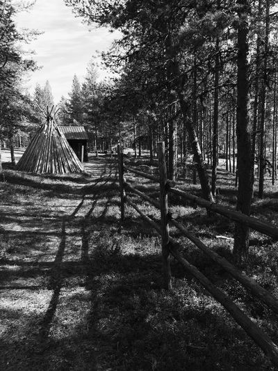 Inari, Finland Siida Tree Outdoors No People Nature Tranquility Beauty In Nature Black & White Blackandwhite Black And White Blackandwhite Photography Lapland, Finland Lapland Museum Old Way Of Life EyeEmNewHere