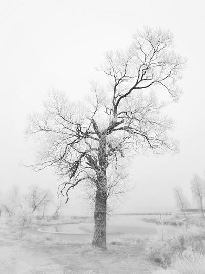 Tree_collection