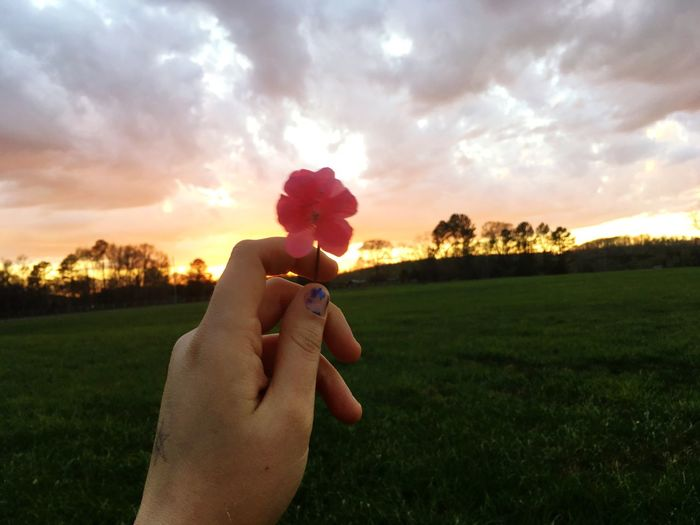 Close-up of woman hand holding flower on field against sky during sunset