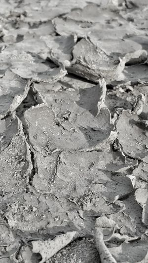 Full Frame Outdoors Nature Beach Black And White Textures Definition Backgrounds Dried Mud Mud Dirt Cracks Cracks In The Earth Earth Shapes And Forms Pattern Dried Up Earth Tones Textured Surface Lights And Shadows Lines And Shapes Shapes And Design Patterns In Nature Dried Curled Up