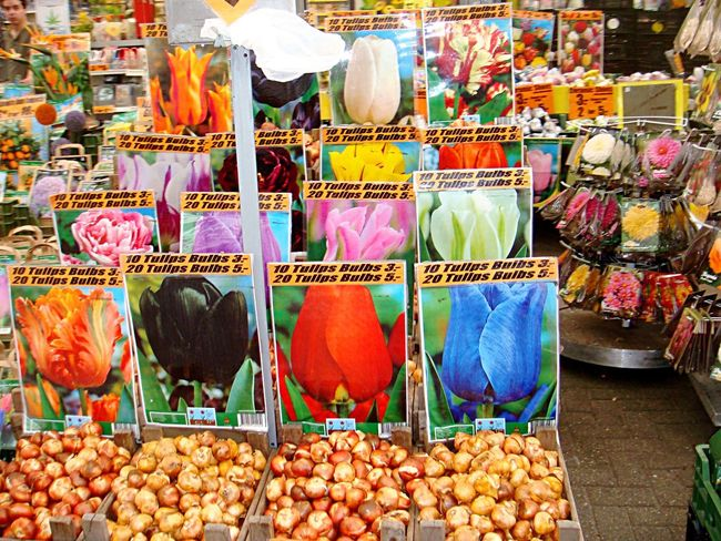 Adapted To The City Retail  Choice Market Variation For Sale Market Stall Large Group Of Objects Flower Tulips No People Outdoors Freshness Price Tag Supermarket Day Amsterdam Netherlands