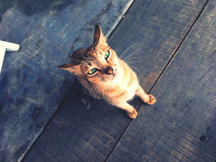 Cat Cat Eyes Animal Stray Cat Vietnam An Bang Beach Hoi An Beauty ASIA First Eyeem Photo