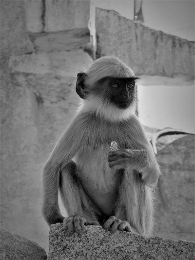 Close-up of monkey sitting outdoors