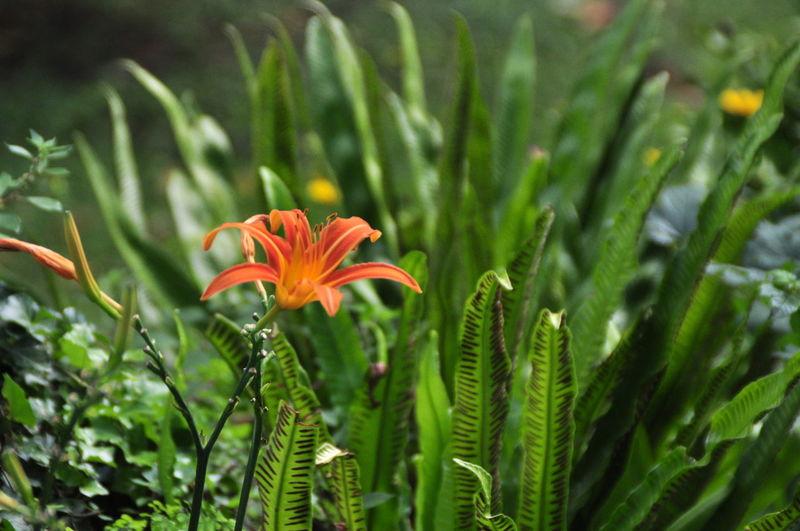 Beauty In Nature Botany Close-up Flower Fragility Green Nature Ninfa Orange