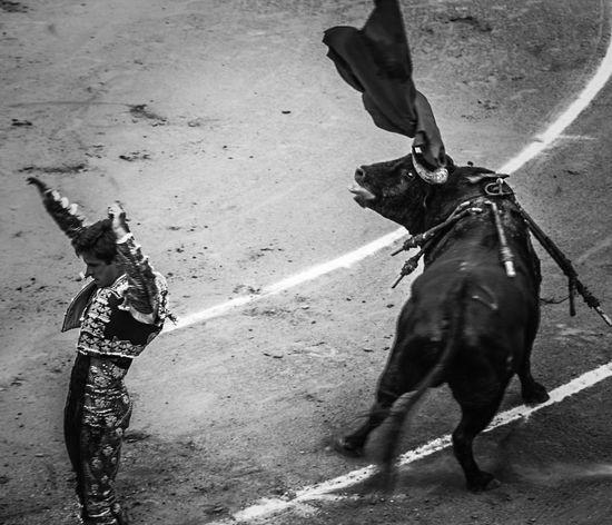 El Juli, matador desde hace 15 años. Tiene 31. El Juli, matador since 15 years. He's 31. Blackandwhite Bw_collection Black And White SPAIN
