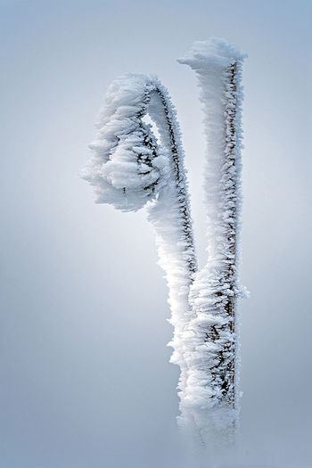 Low angle view of icicles against clear sky