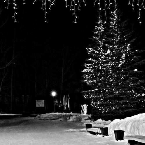 Night Lights Trees Snow ❄ Street Black&white Bw