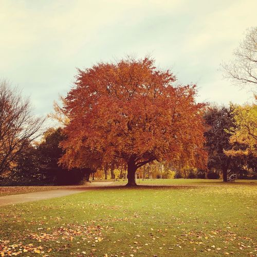 Autumn Tree Change Leaf Beauty In Nature Nature Tranquility Tranquil Scene Outdoors Scenics No People Day Growth Landscape Grass Sky Maple Branch Bäume Herbst Herbststimmung Jahreszeiten Zoopark