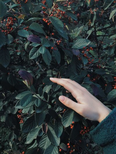 Body Part Day Finger Green Color Growth Hand Holding Human Body Part Human Finger Human Hand Leaf Leaves Leisure Activity Lifestyles Nature One Person Outdoors Plant Plant Part Real People Touching