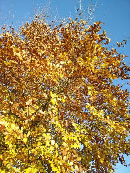 Herbstfarben Herbstlaub Gelb Und Blau Herbsttag Der Herbst Steht Auf Der Leiter Autumn Colors Autumn Leaves Yellow And Blue