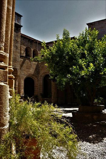 Green Color No People Arquitecture Claustro Stone Building Stone Material Art Architecture And Art Columns And Pillars Tree Arch Architecture Building Exterior Built Structure