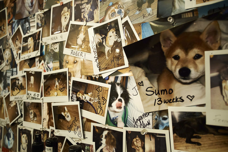 Full frame of dog pictures on wall