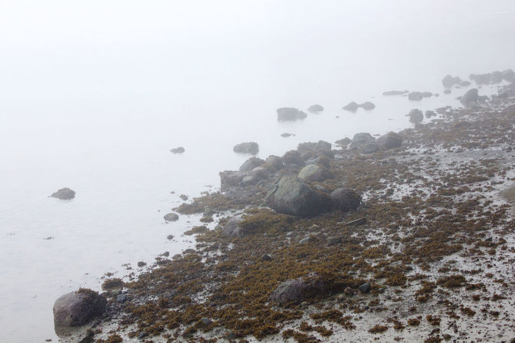 Rock Nature No People Fog Water Sea Day Tranquility Tranquil Scene Beach Environment Outdoors Land Solid