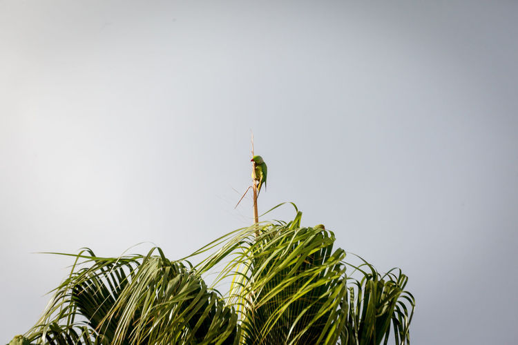 Close-up of grasshopper on plant against clear sky