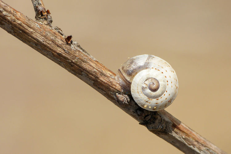 Close-up of snail on tree branch