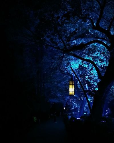 Night Tree Blue Illuminated