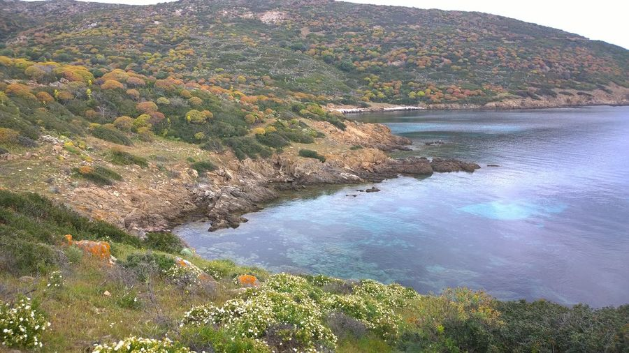 Nature Water Beauty In Nature Sea Tranquility Sardinia Asinara