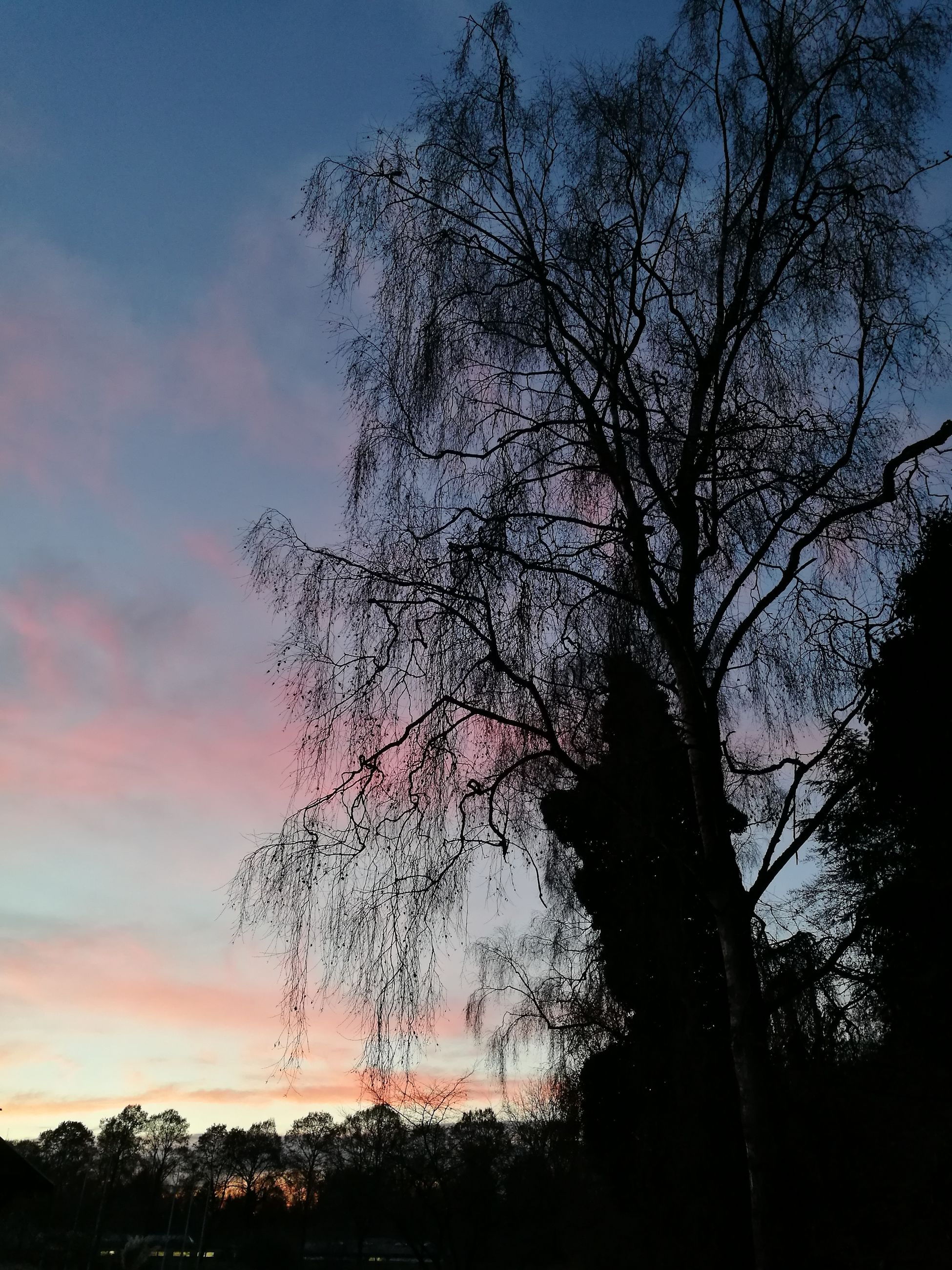 sunset, sky, nature, beauty in nature, tree, tranquility, no people, silhouette, outdoors, growth, low angle view, cloud - sky, day