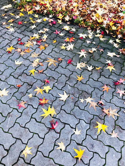 High angle view of autumn leaves on footpath