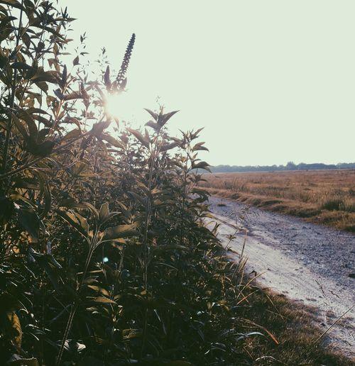 • road less traveled