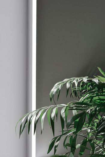 Less is more Light Simplicity Plants Plant Life Plant Nature Shadows & Lights The Week on EyeEm EyeEmBestPics EyeEm Nature Lover EyeEm Selects Minimalism Minimal No People Wall - Building Feature Leaf Plant Indoors  Close-up Day Plant Part Nature Home Interior Growth Green Color White Color Softness