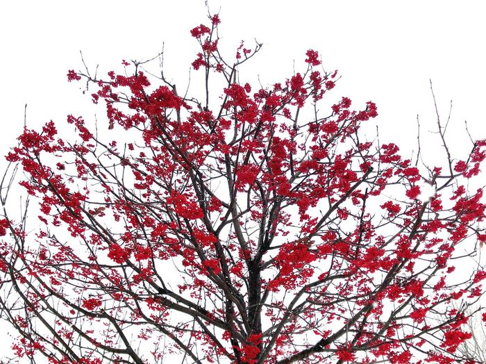 nanakamado EyeEmNewHere Beauty In Nature Branch Flower Nature Low Angle View Growth Tree Blossom Springtime Outdoors Freshness Day Fragility No People Tranquility Clear Sky Scenics Autumn Sky Close-up