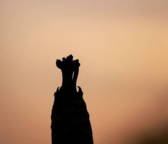 🌑 black Tags : Photography Instagram Instagood Instalike Instapic Doubletap India Sun Sky Clouds Plants Horizon Orangesky Skyscape VSCO Vscocam Vscophoto Canon Canonphotos Canon_photos Canonphotography Canonphoto Instacanon Canongram Sunset silhouette treebranches lightandshadow lightanddark
