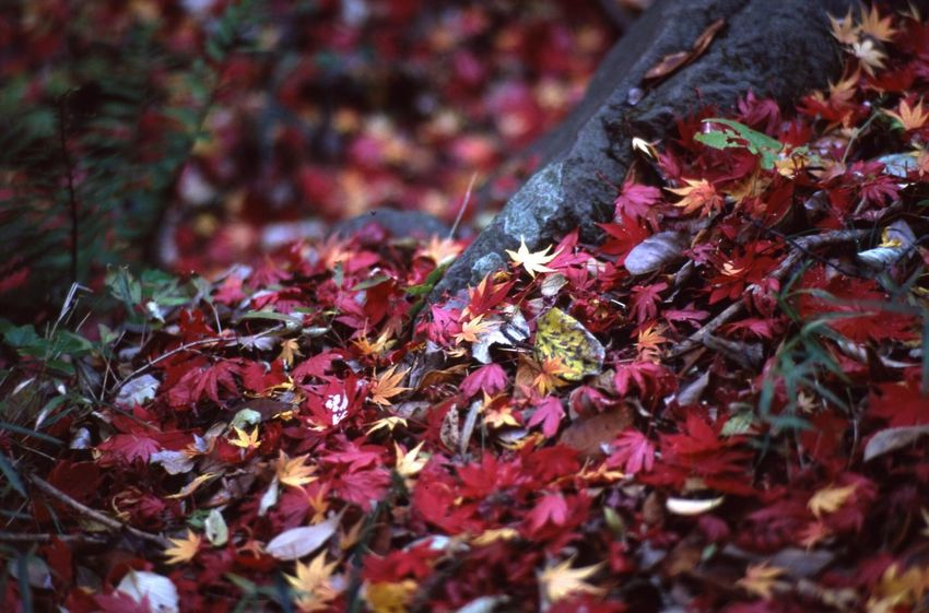 Autumn Colors (in case if you prefer British English spelling like me, Autumn Colours ) Market Bestsellers September 2016 Bestsellers