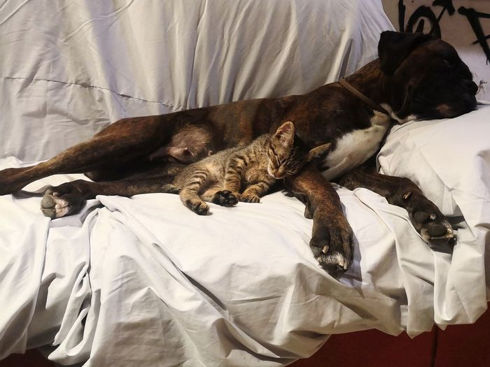 Pets Bedroom