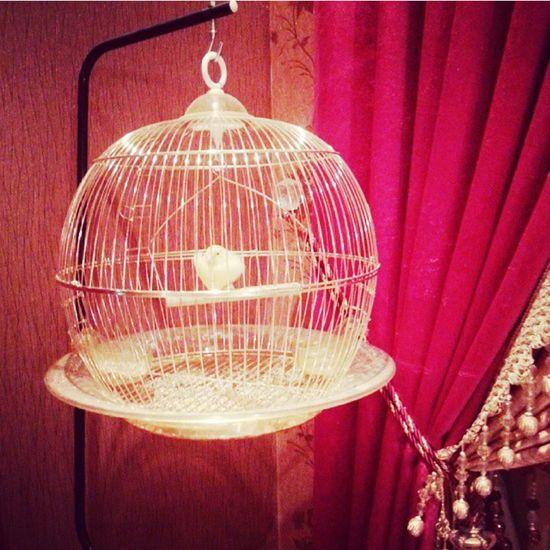 Mybird Bird Photography