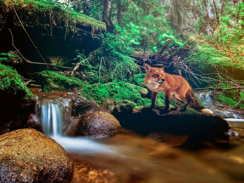 Peculiar Beauty Animals In The Wild Waterfall Waterfalls Rocks And Water Forest Wildlife Trees And Nature Green Plants Farn Beauty In Nature EyeEm Best Shots Water Reflections Motion Pure Peculiar Nature No People Fox Animals In The Wild Tranquility Nature The Week On EyeEm EyeEmBestPics Natural Beauty Leafy Greens