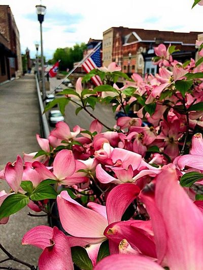 Flower Building Exterior Architecture Built Structure Freshness Focus On Foreground Fragility Beauty In Nature Nature Plant Day Petal Growth Outdoors Flower Head City Close-up Blooming No People Morristown Tn