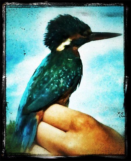 Birds Bird Aves Nature