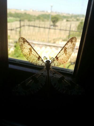 Butterfly My Kitchen Window