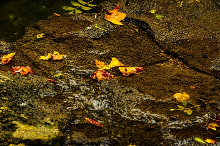 High angle view of yellow leaves on lake