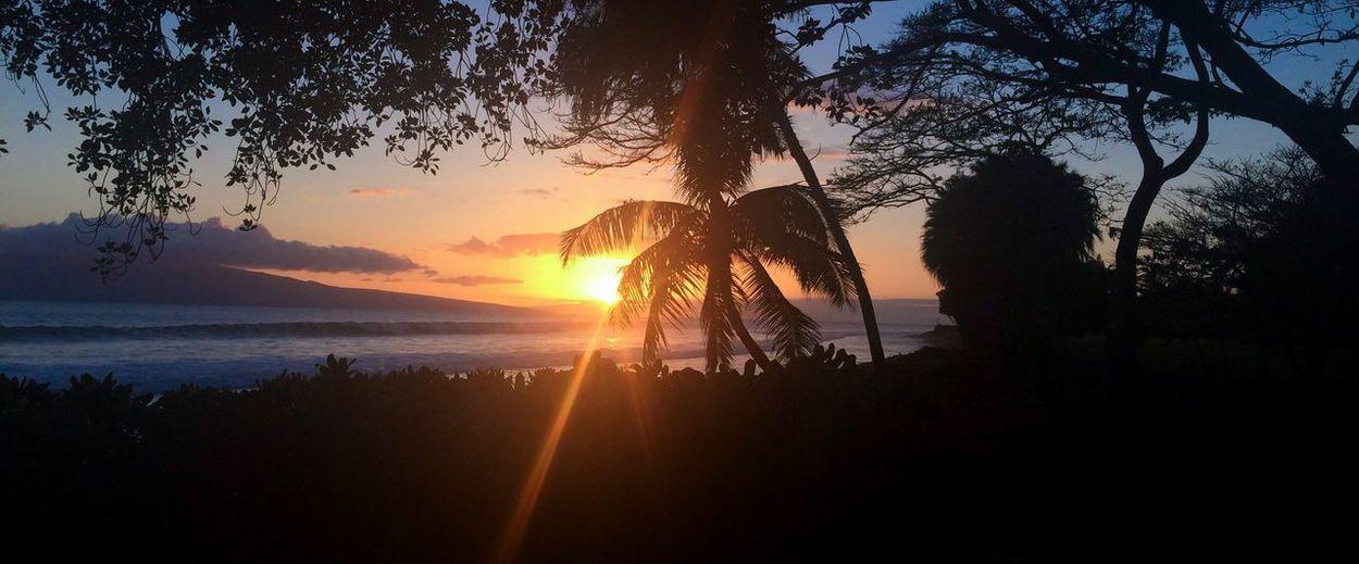 Maui Sunset Beauty In Nature Nature Silhouette Tree Tranquil Scene Sun Scenics Sunbeam Sky Water Outdoors No People Sunlight