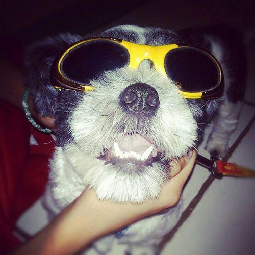 Summerness 2.0 :)) Shitzu Doggieselfie Selfiemomukhamo Maymainstagramlang