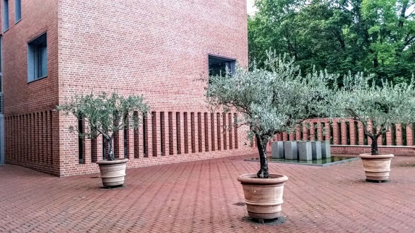 EyeEm Selects Outdoors Architecture Building Exterior Day Tree Built Structure No People City Architecture Façade Backgrounds EymEm New On Market