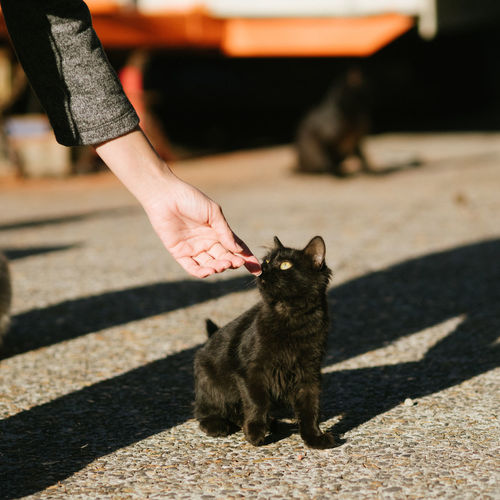 Black Color Day Domestic Animals Domestic Cat Feline Focus On Foreground Mammal Outdoors Pets Whisker