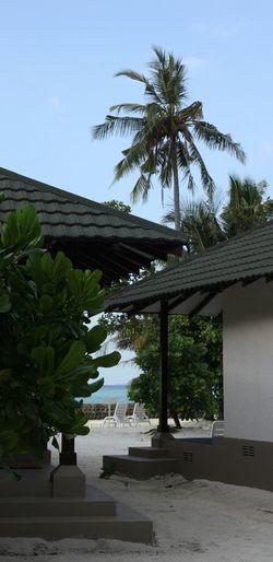 House Palmtree Tree Sea Roof