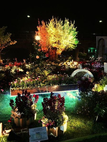 Flower Night Illuminated Life In Yokohama Night View On A Stroll Hello World Taking Photos Check This Out