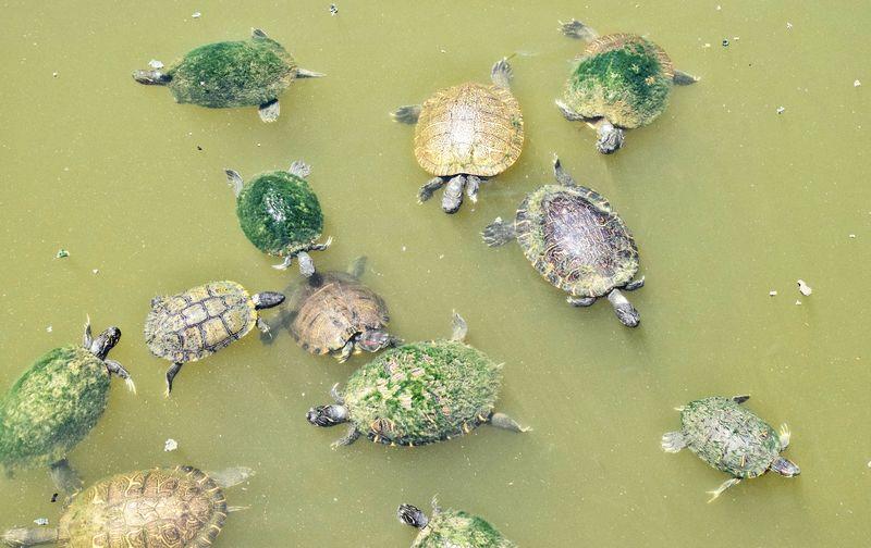 turtles,turtles