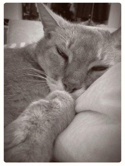 Sunday chill Cats Of EyeEm