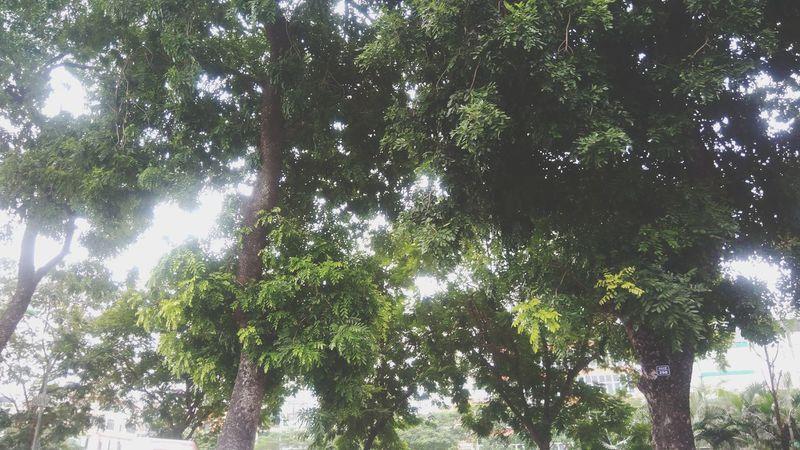 Dreamlike Green Color Branch Tree Growth Vietnam Hanoi City Outdoors TheWeekOnEyeEM EyeEmNewHere Fall