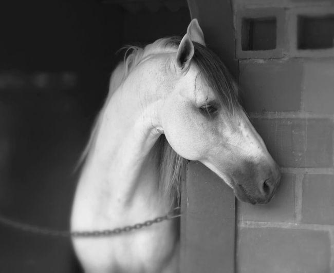 B&W Portrait Eye4photography  NEM Black&white Monochrome EyeEm Best Shots - Black + White Streamzoofamily Portraits TheWeekOnEyeEM The Portraitist - 2015 EyeEm Awards