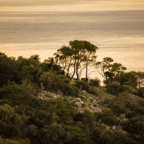 High angle view of trees by sea against sky