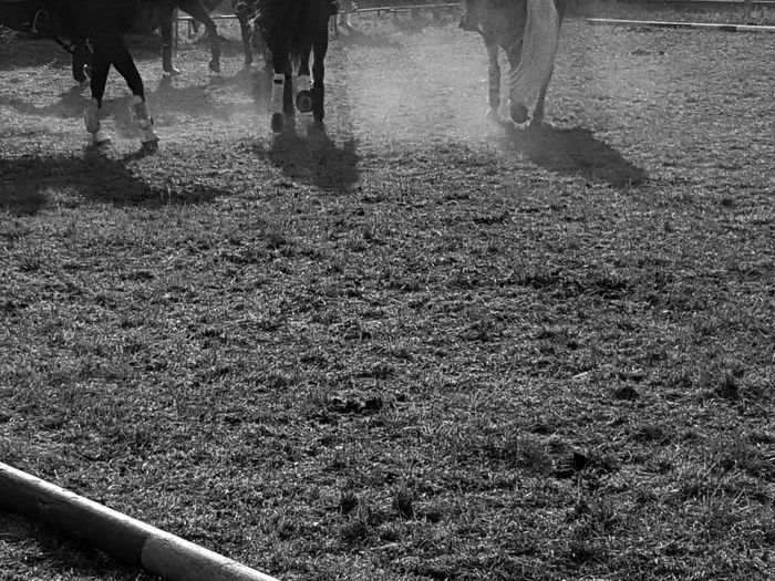 Horses Carousel Horse Horse Country Life People Country Dust Dusty Road Blackandwhite Domestic Animals Outdoors Taking Photos Nature Cellphone Photography Enjoying Life