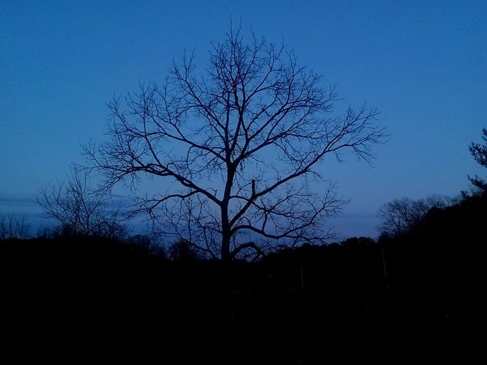 Silhouette bare trees against blue sky