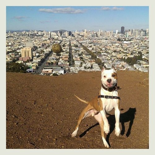 Whoops. Floydpup loooves being a Sanfranciscodog