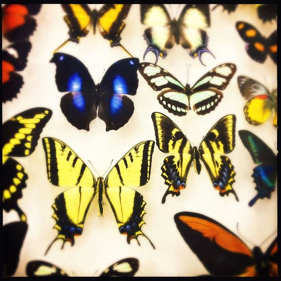 Butterflies Exhibition Colorful